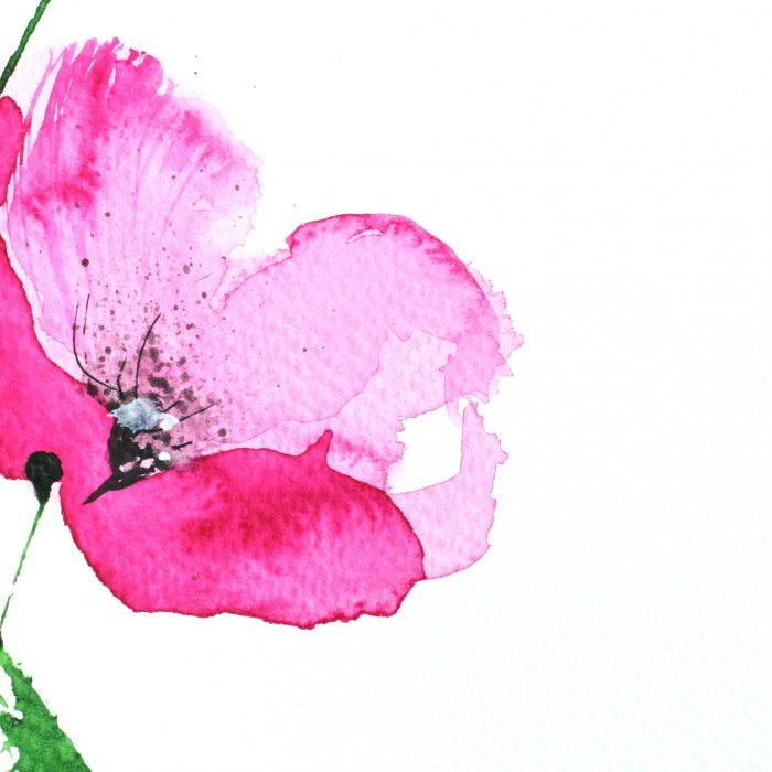 Watercolour Pink Poppy Flower